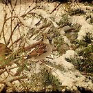Sparrow In Winter IV by Angie Tirado