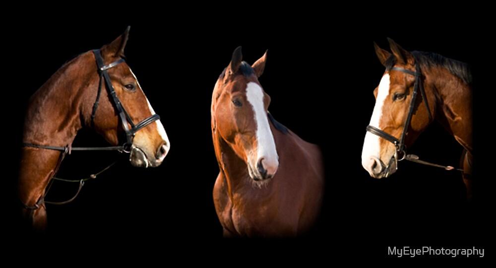 Equine Portrait - Composite 2 by MyEyePhotography