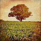 Tree on edge of field. by Lyn  Randle