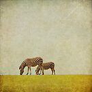 Zebras. by Lyn  Randle