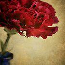 Single dark red Carnation in blue bottle. by Lyn  Randle