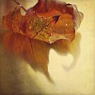 Curled Autumn Leaf. by Lyn  Randle