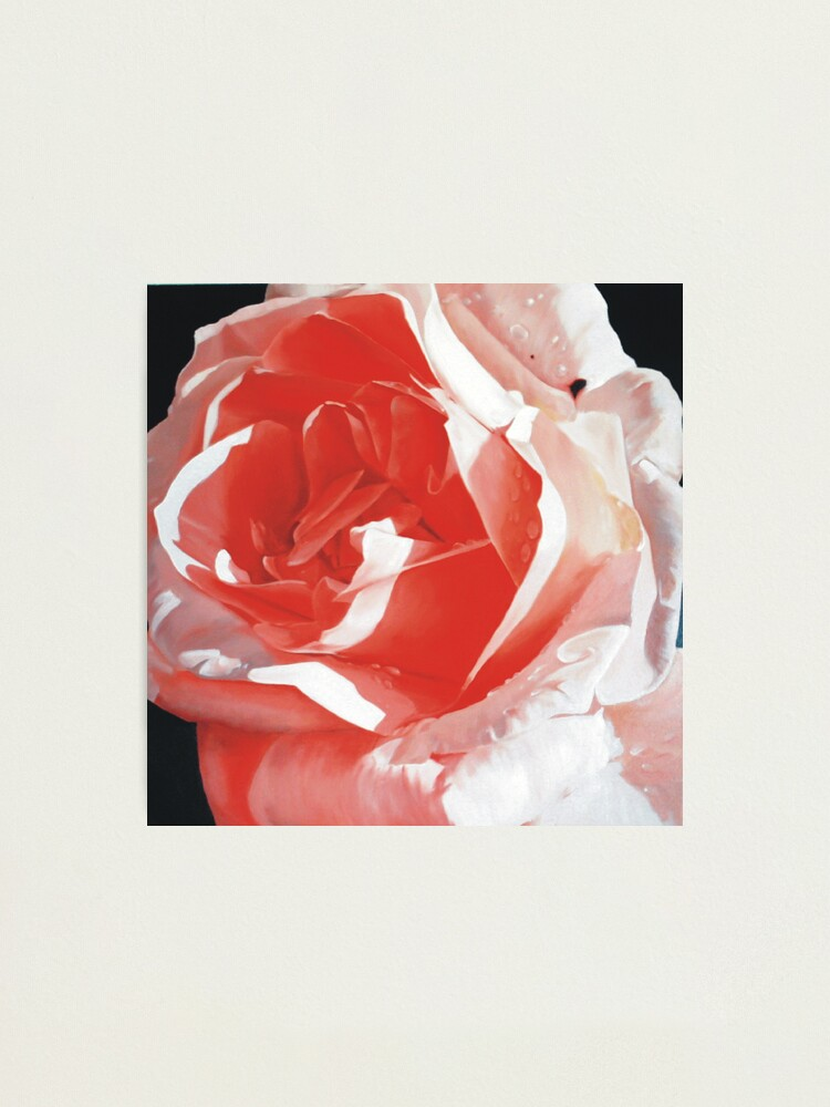 Alternate view of Cathy's Rose Photographic Print