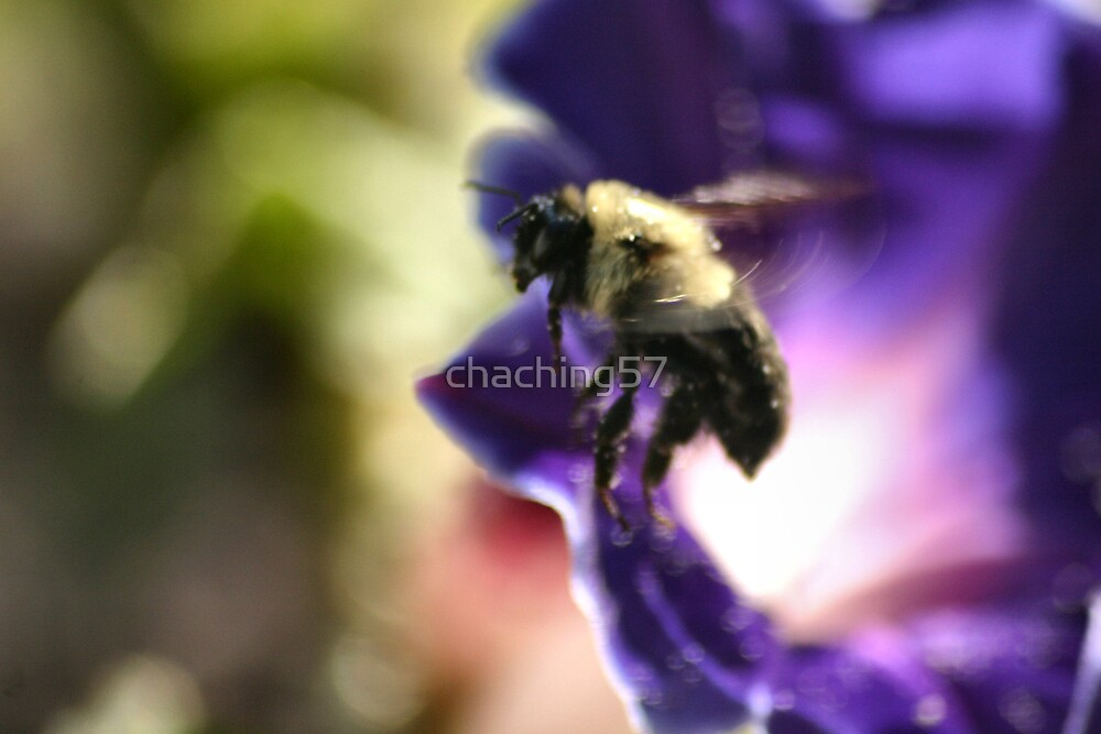 The bee by chaching57