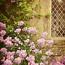 Cottage Garden.  by Lyn  Randle