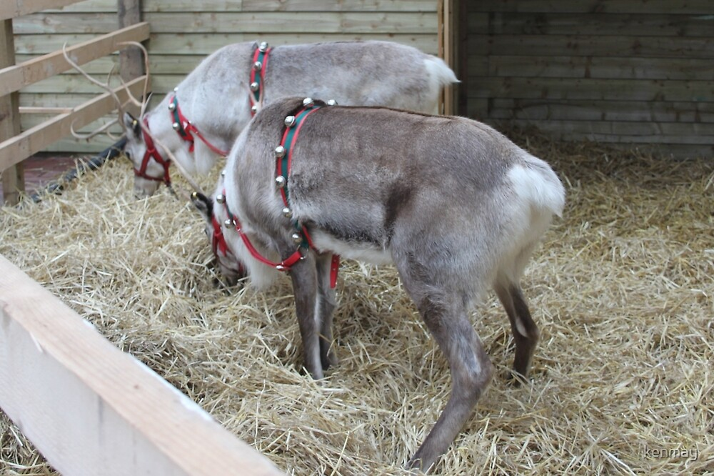 Reindeer at Trelawney Garden Centre. by kenmay
