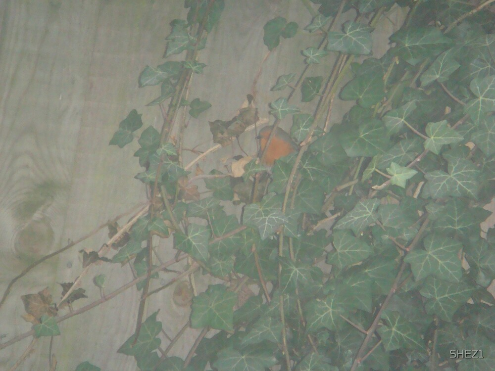 Robin in hiding by SHEZ1