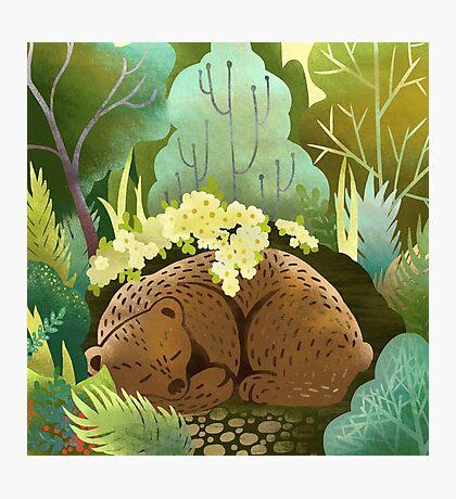 Bear Nest Photographic Print