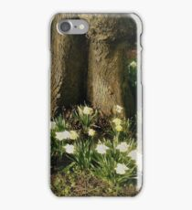 Daffodils By an Old Tree and graves iPhone Case/Skin