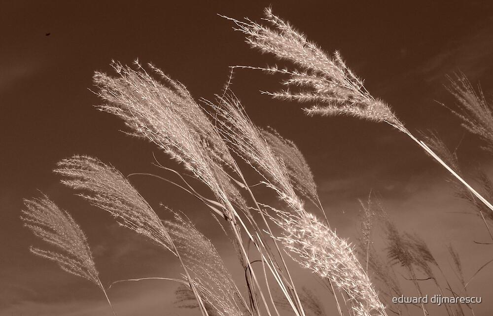 in the wind by edward dijmarescu