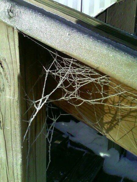 Frozen Web by Lou52