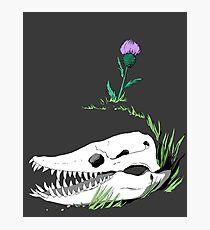 Highlands Elasmosaurus Photographic Print