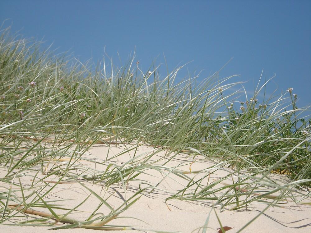 beach horizon by kveta