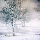 Birch and mist by Silvia Ganora