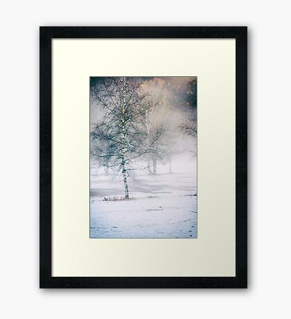 Birch and mist Framed Print