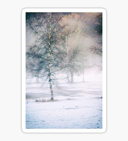 Birch and mist Sticker