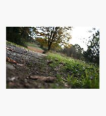 Dirt Road Photographic Print