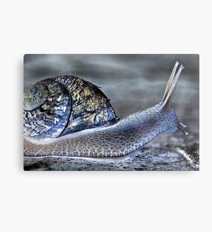 Snail's Pace Metal Print