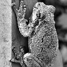 Treefrog by Rachel Leigh