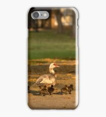 Muscovy Duck with Ducklings, Kendall, Florida, USA iPhone Case/Skin