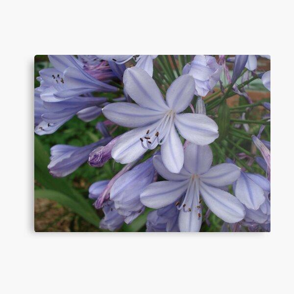 magic blue flowers 2 Metal Print