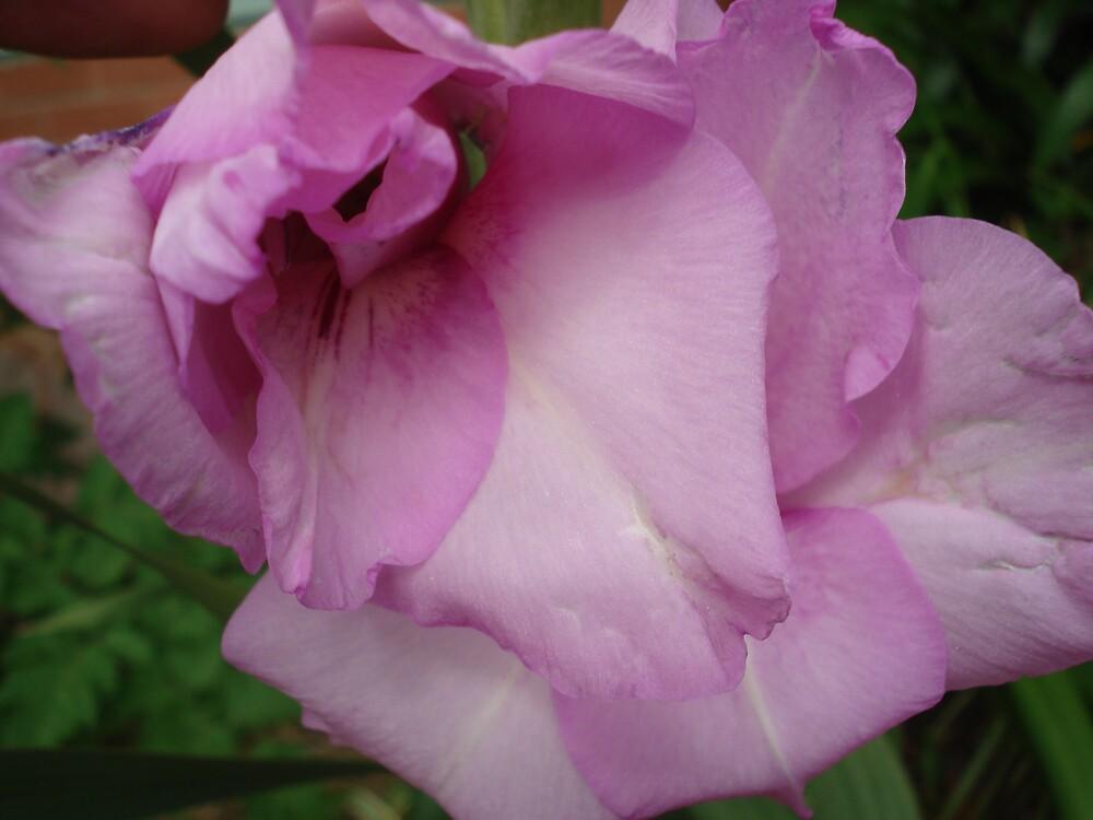 magic pink flower 2 by kveta