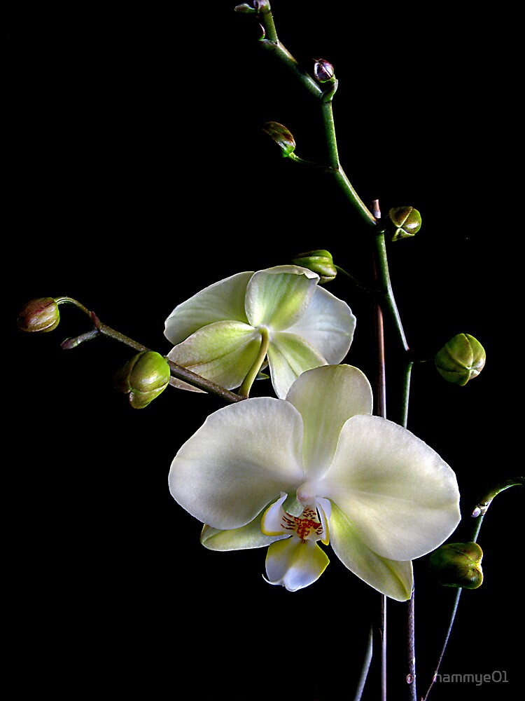 I Love Orchids by hammye01