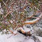 Winter Garb by Harry Oldmeadow