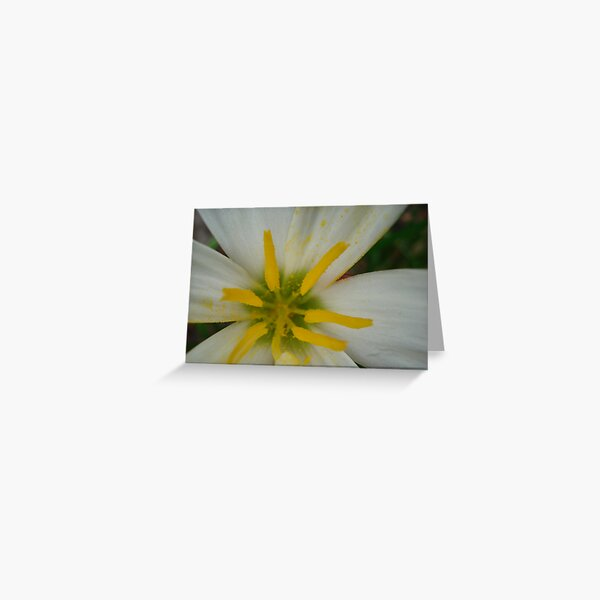 spring white flower Greeting Card