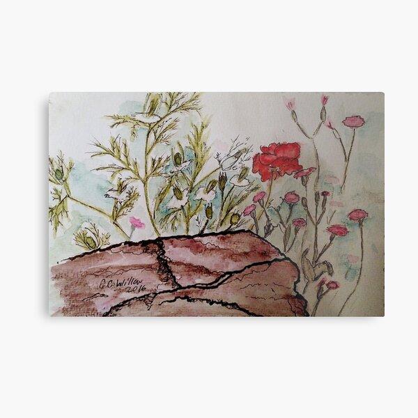 Poppy at Springer Botanical Metal Print