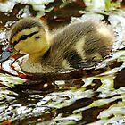Dabbling Duckling by Debbie Oppermann