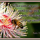Your Word is Like Honey by picketty