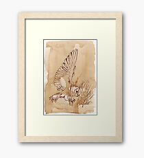 Barn Owl hunting 1 Framed Print