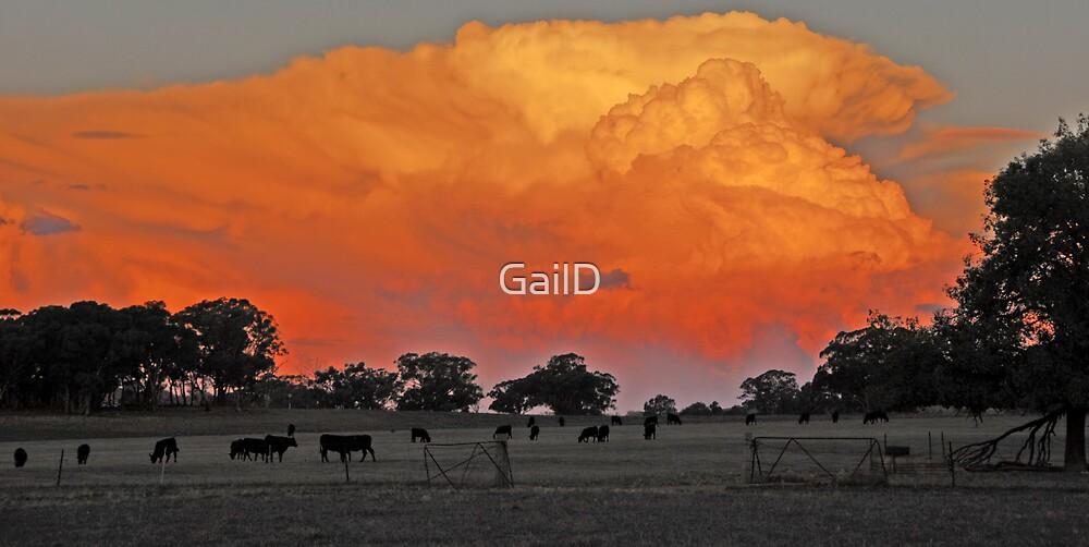Orange Glow by GailD