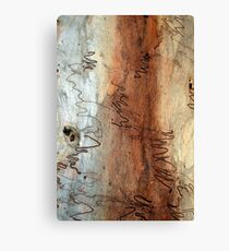 Scribbly Gum Canvas Print