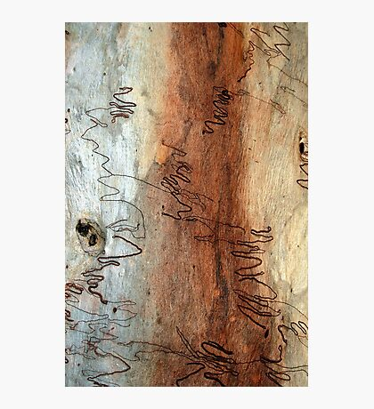 Scribbly Gum Photographic Print