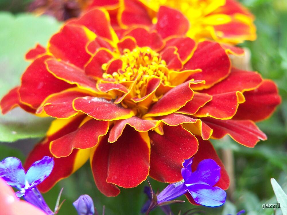 wild flower by gazzf1