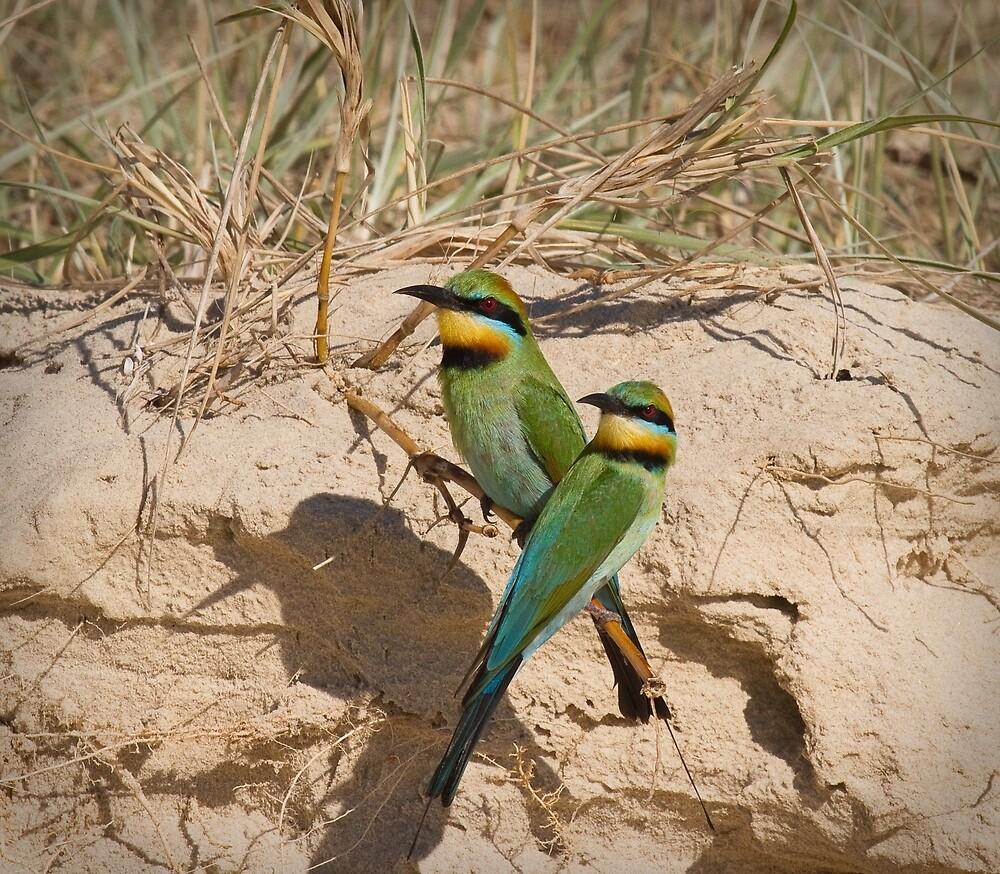 """Arc-en-ciel"" Guepiers .. Rainbow Bee-eaters. by RickinNR"