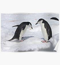 "Chinstrap Penguins ~ ""Konnichiwa (hello)"" Poster"