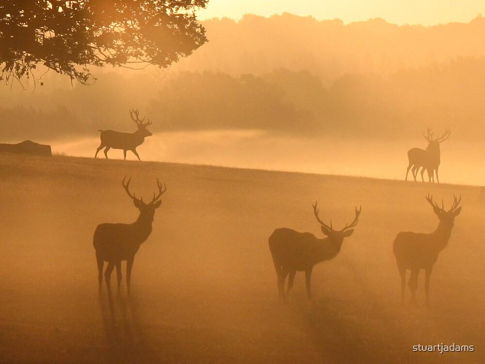 red deer at sunrise by stuartjadams