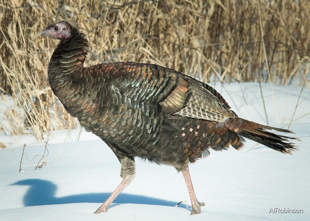 You turkey, you! by AlRobinson
