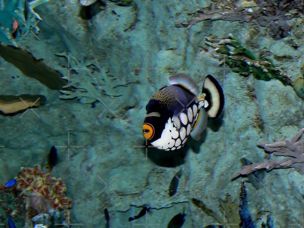 Parrot Fish by Sandra Chung