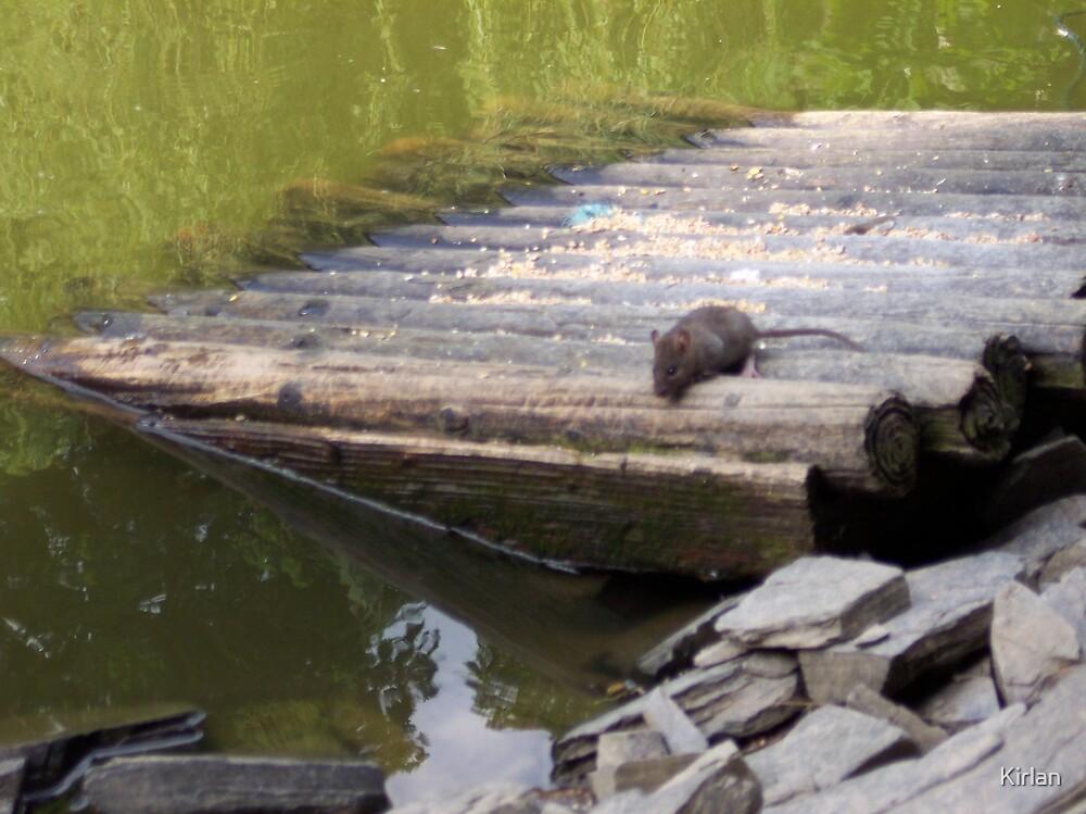 Mouse On Log Raft by Kirlan