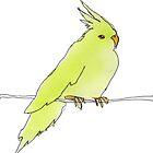 cockatiel by Matt Mawson