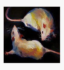 2 rats Photographic Print