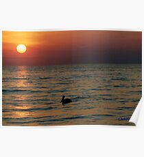 PEACEFUL PELICAN ON THE OCEAN AT DUSK Poster