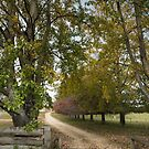 Autumn Country Driveway by Clare Colins