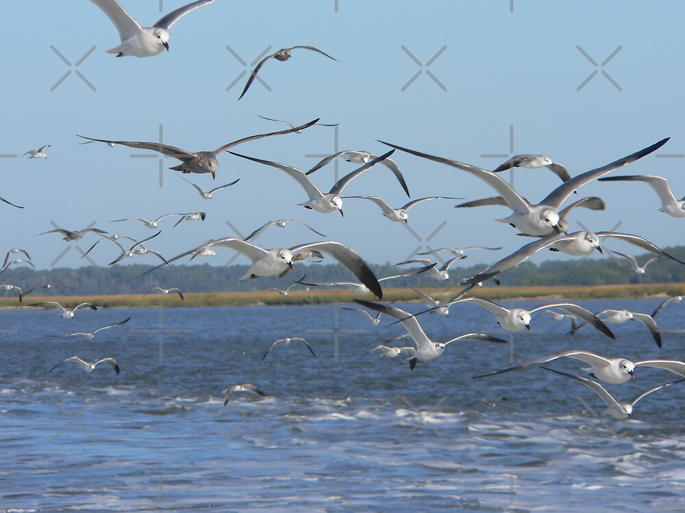 Birds in Flight by kevint