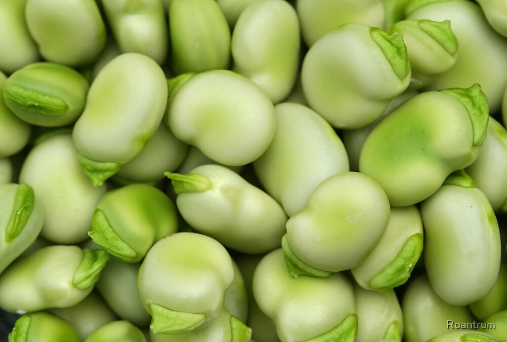 Broad Beans by Roantrum