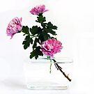 Unusual Reused Plastic Vase with Chrysanthemum by patjila